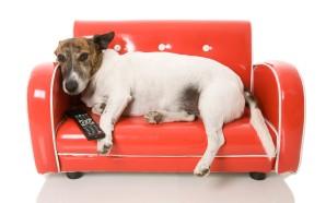 Habrá una programación que incluye imágenes y sonidos de cosas que los perros les tienen miedo, como por ejemplo, coches, fuegos artificiales, tormentas eléctricas, entre otras cosas.