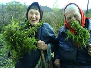 Foto, Facebook página legalización de la marihuana.