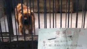 Uno de los animales disfrazados del zoo de China (South China Morning Post)
