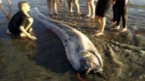 Esta serpiente marina fue descubierta en la ciudad de Oceanside, cinco días después de que otro ejemplar más grande, de 5,5 metros, fuera encontrado.
