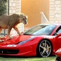 Instagram se está llenando con fotos de jeques sauditas con sus peligrosas mascotas