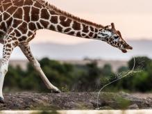Autor: MAJED AL ZAABI Foto: National Geographic