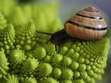 Autor: HARJEN WOLTJE Foto: National Geographic