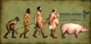 El Roundup de Monsanto deforma animales y produce cambios en cadáveres.