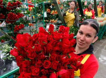 A las afueras de la ciudad se encuentran ubicados, en su mayoría, los cultivos más conocidos de flores de la sabana de Bogotá .
